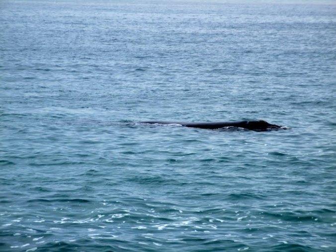 baleine-1