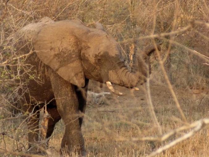 elephant%202