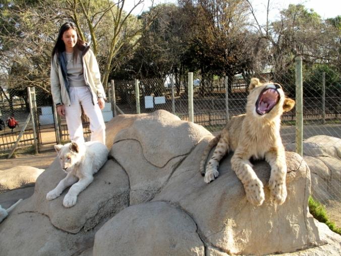 lions%201