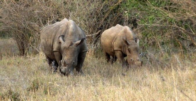 rhino%20g_0262