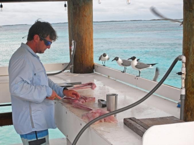 Bar à mouettes, Exumas, Bahamas
